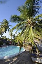 kokosnötsträd...