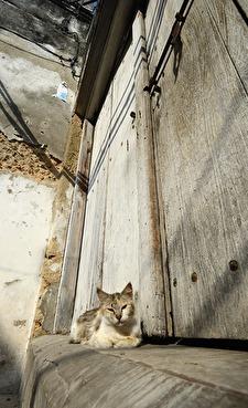 katter överallt, tur det för annars kanske det vore råttor överallt...