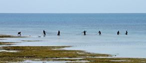 fiskare med sina nät...