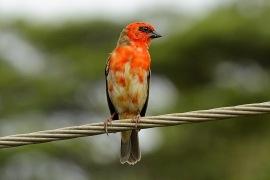 fin fågel, sett från våran balkong...