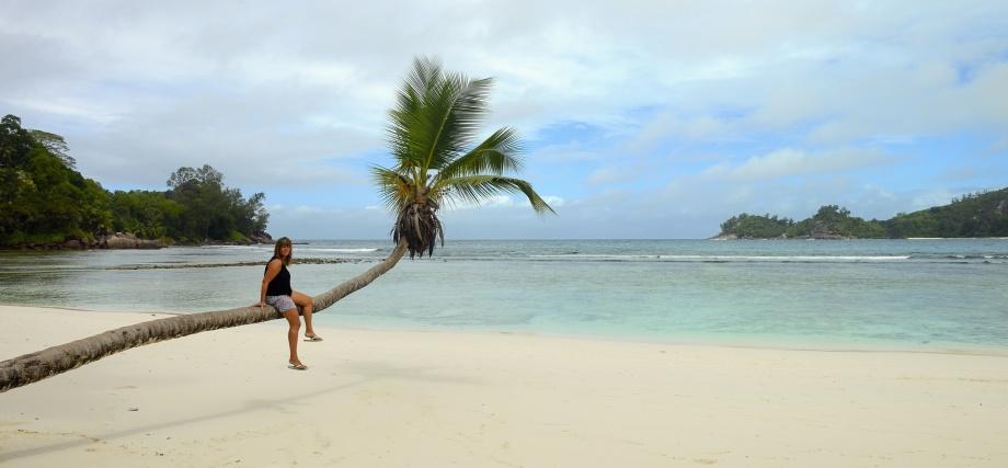 nosen i palmen, namnlös strand...