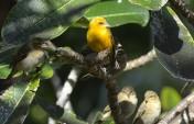 the bird king...
