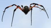 den obligatoriska spindeln, såklart...
