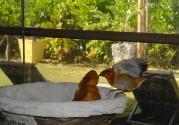 fint fågelbesök på morgonen...