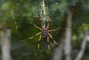 spindel igen...