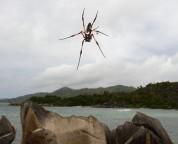 detta är en värstingstor spindel...