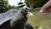 dom vandrar fritt på vissa öar men är nästan tama och äter ur handen på en...