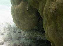 blåsfisk som simmade ifrån mig...