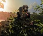 är aporna levande...