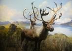Canadien Elk...???