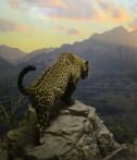Jaguar på jakt...