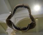 kan det vara en Megalodon...