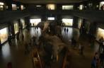afrikanska elefanter...