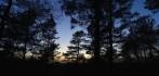 en fantastisk skog med många väsen...