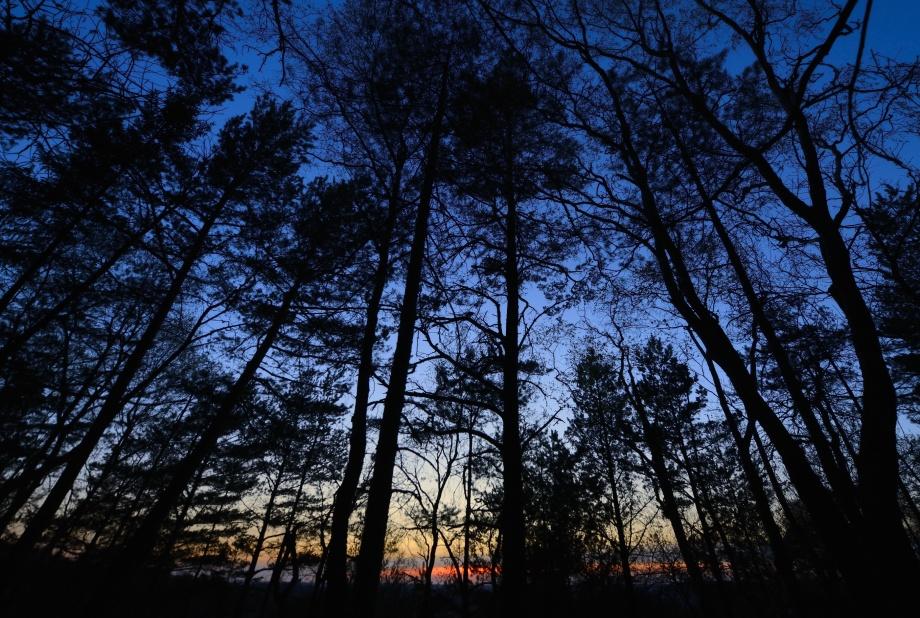 påskaftonen avslutades i den förtrollade skogen som omhuldar Blacktjärn i dess mystik...