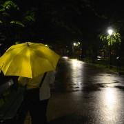 gult paraply är fint...