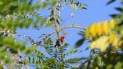 fina fåglar i träden...
