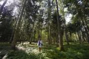 Carina i stora skogen på Visingsö...
