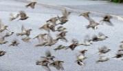 småfåglar i flykt...