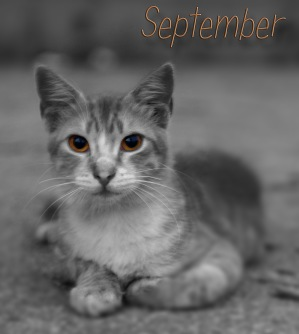 en september katt...