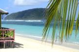 palmer, färger och hav...