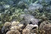 strandnära koraller och fiskar...