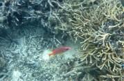 röd liten fisk...