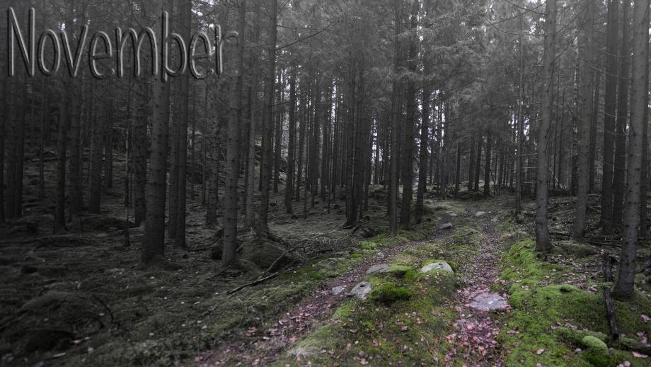 november skog...