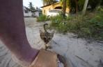 världens minsta katt...