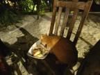 katten fick äta upp fisk huvudet, nått måste man ju lämna till de arma djuren...