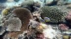 inte så många fiskar men fina koraller...