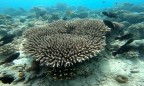 en fin korall blomma...