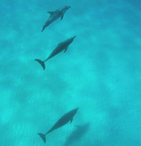 Delfiner...
