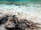 en Triggerfish såklart...