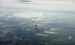 morgonfågel...