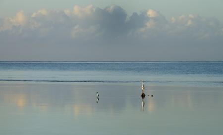 morgonfåglar...