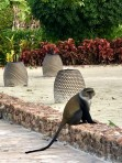 fritt springande hotell-apor fanns det såklart...