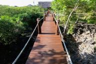 bron till sköldpaddorna...