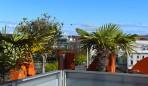 grönt och fint på taket...