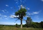 vackert träd på gårdsplanen...