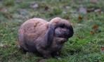 """""""våran"""" gårds-kanin vi döpte honom till """"Blindstyret"""" eftersom han verkade sakna normal syn..."""