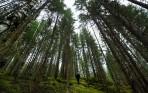 nu går vi in i den stora moss-skogen...