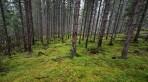 moss-skogen...