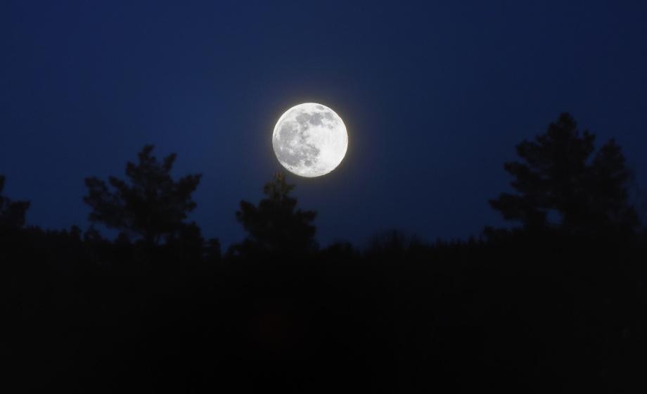 vargarna ylar i natten...