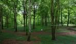 """ensam i """"Robin Hood"""" skogen..."""