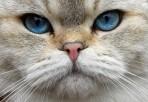 """""""Ärliga blå ögon"""" för er som minns TV-serien från 1977..."""