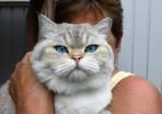 jag är jättefin säger fru Blomma bakom katten...