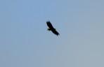 en örn kom seglande över oss, tyvärr på väldigt långt avstånd...