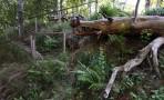 träden ser ut som krokodiler på Hildasholm...