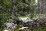 härlig urskog...